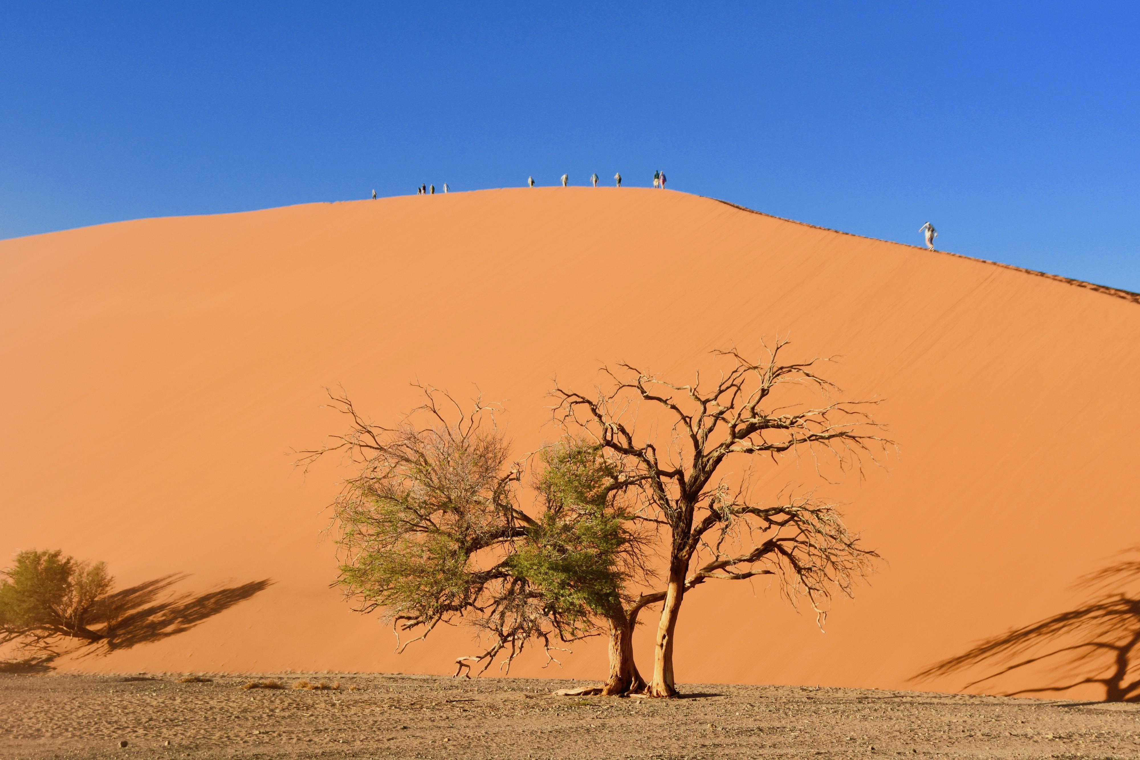 Dune 45 Tree, Sossusvlei
