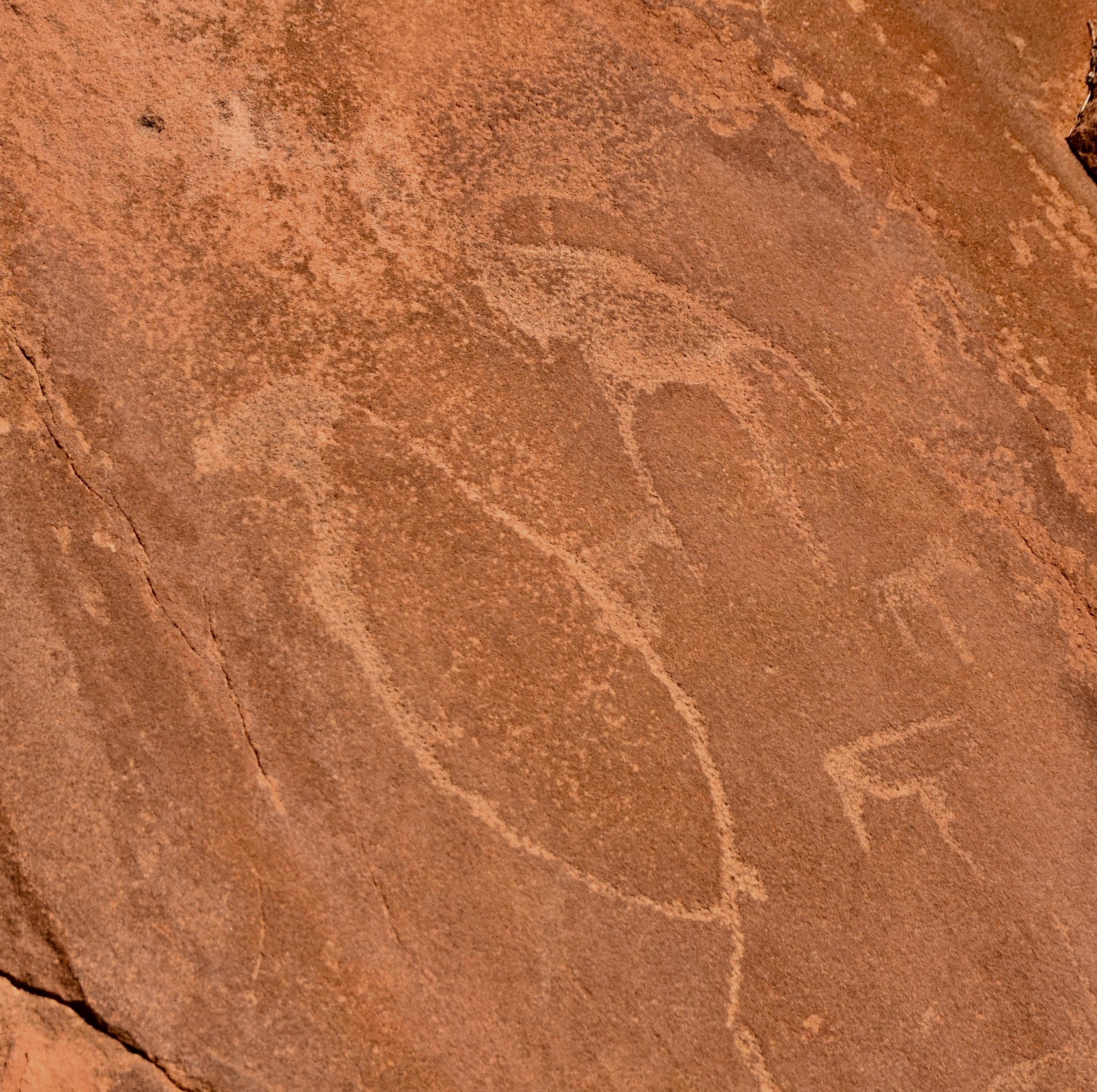 Penguin Petroglyph, Twyfelfontein