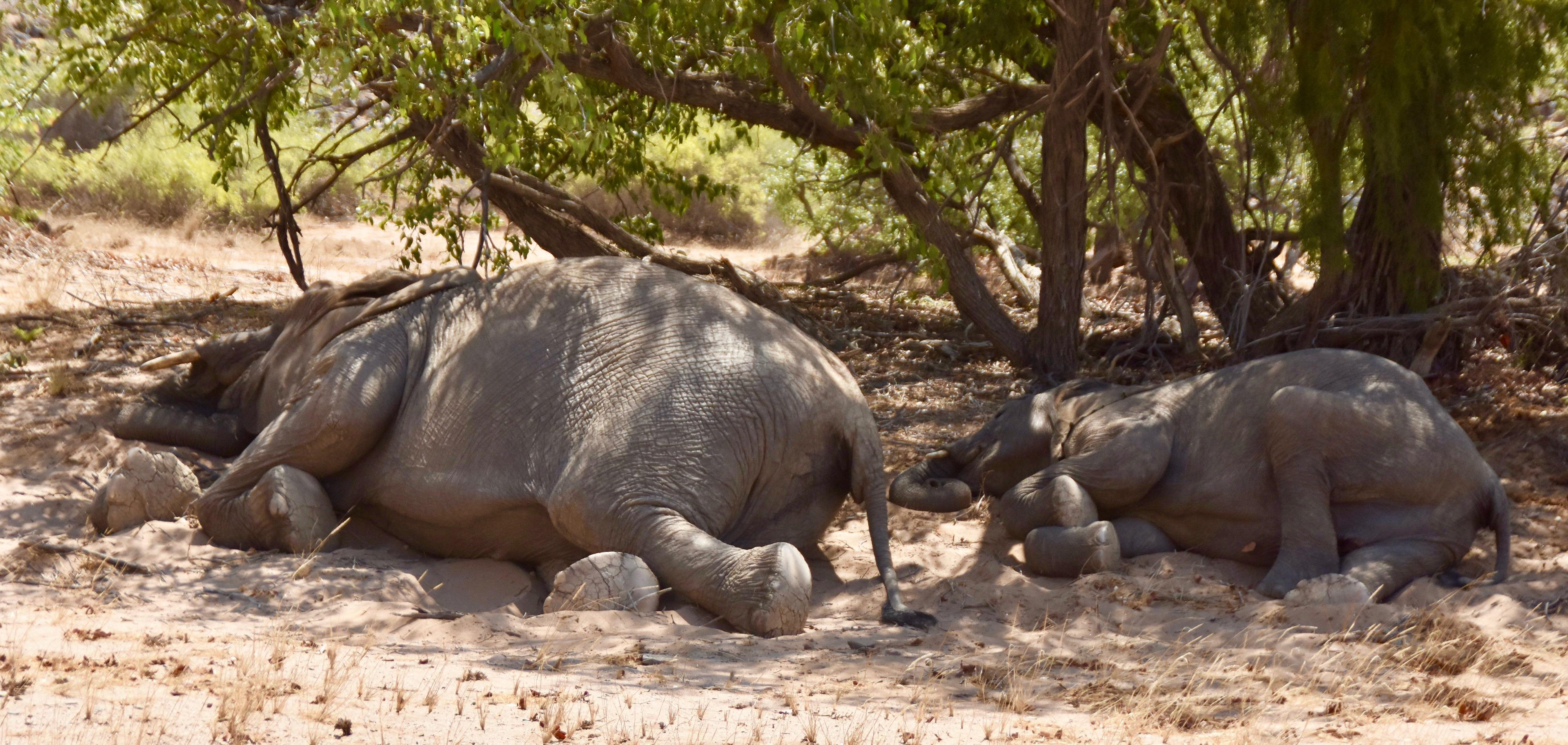 Sleeping Elephants, Damaraland