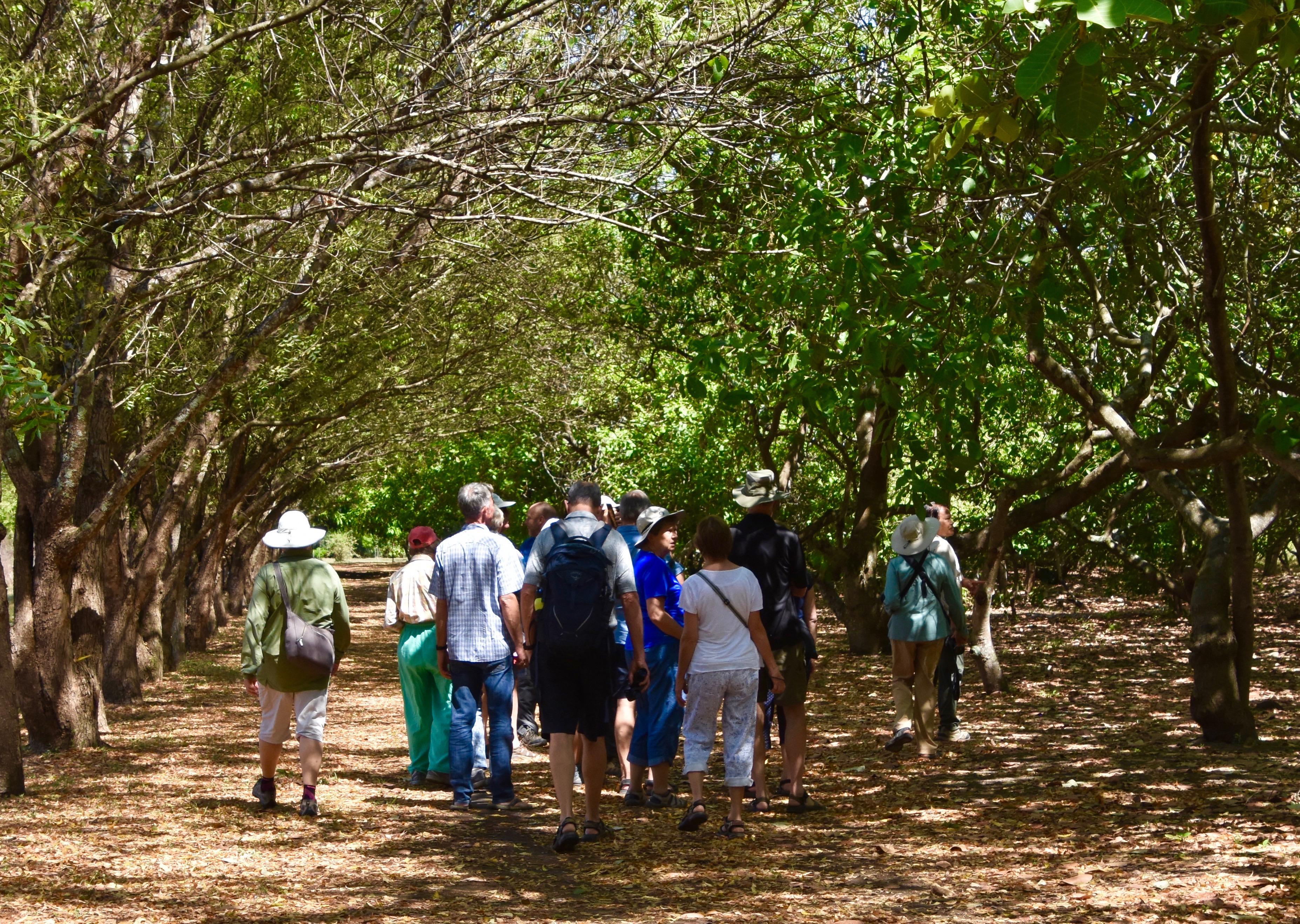 Heading for the Indigo Obraje, Hacienda los Nacimientos indigo farm
