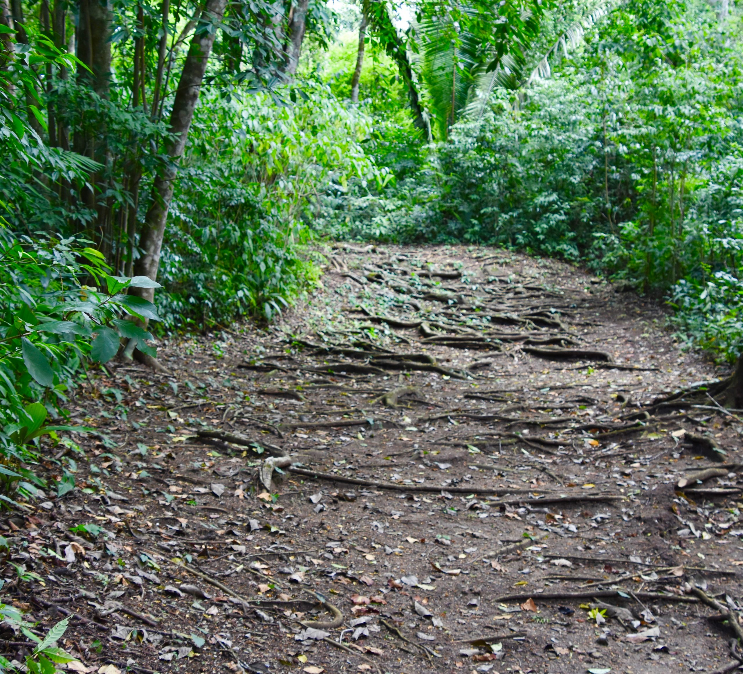 The Path in to Caracol