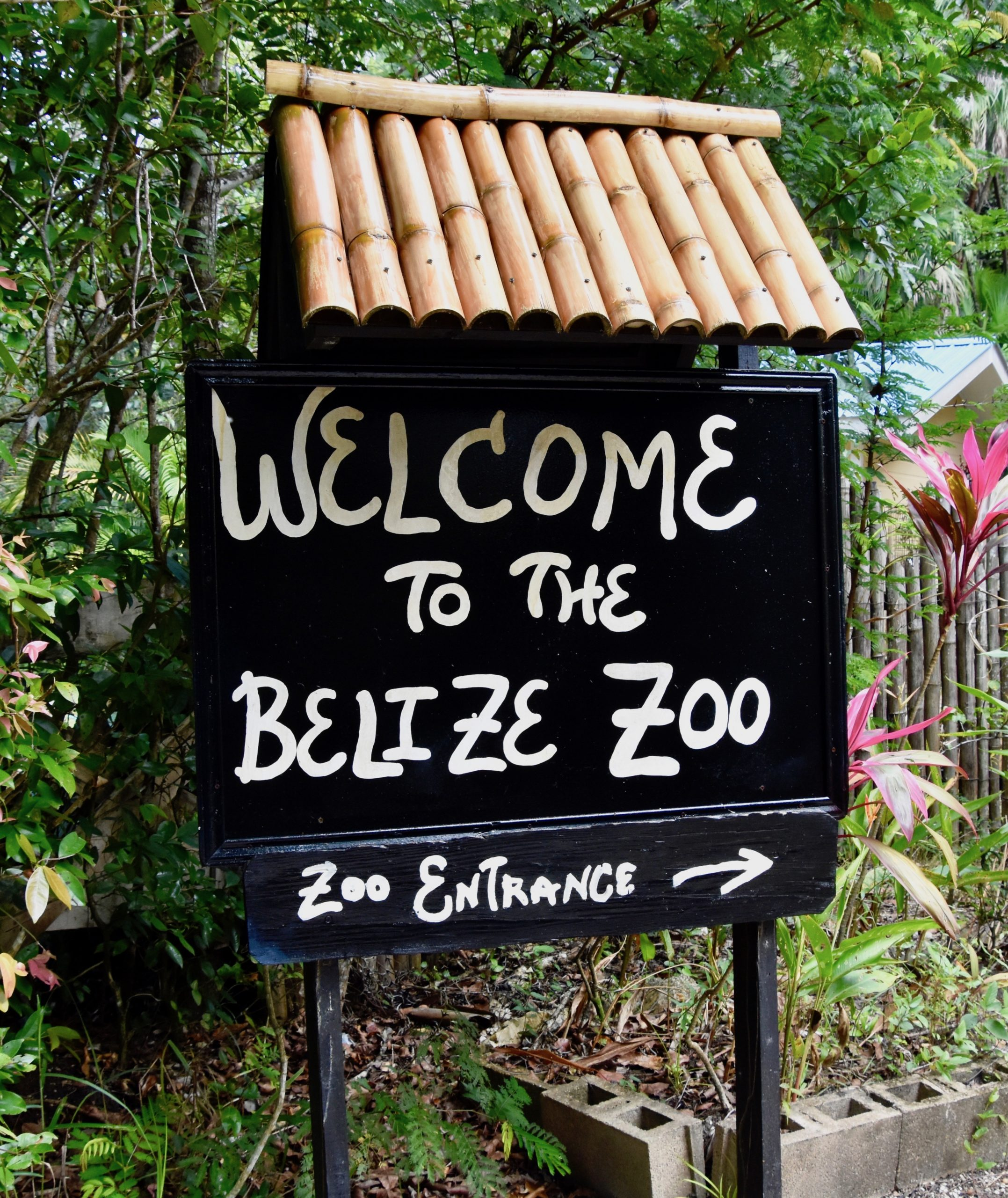 Welcome to Belize Zoo